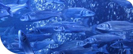 Plava riba_omega-3